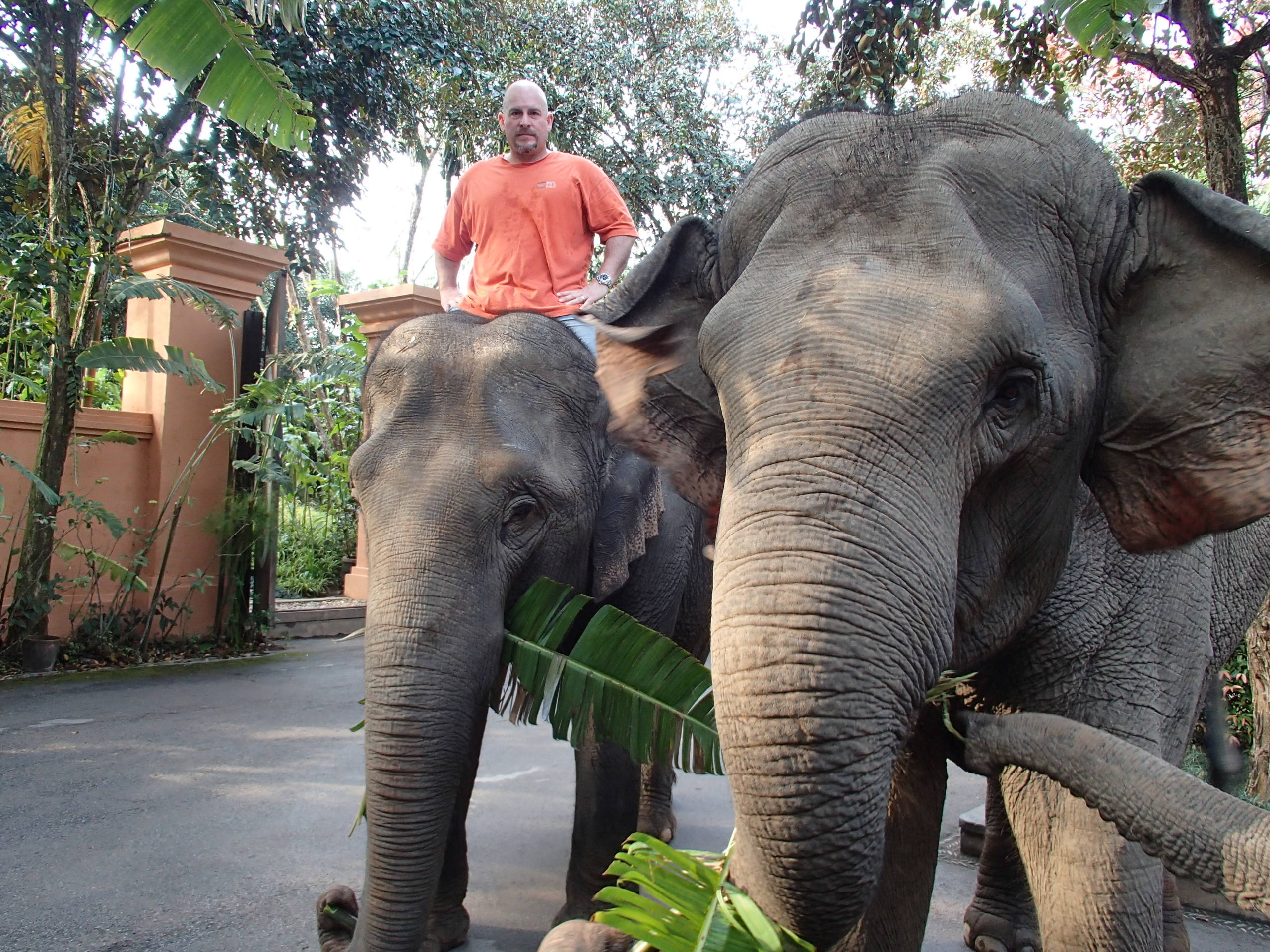 Michael & elephants at Anantara Golden Triangle