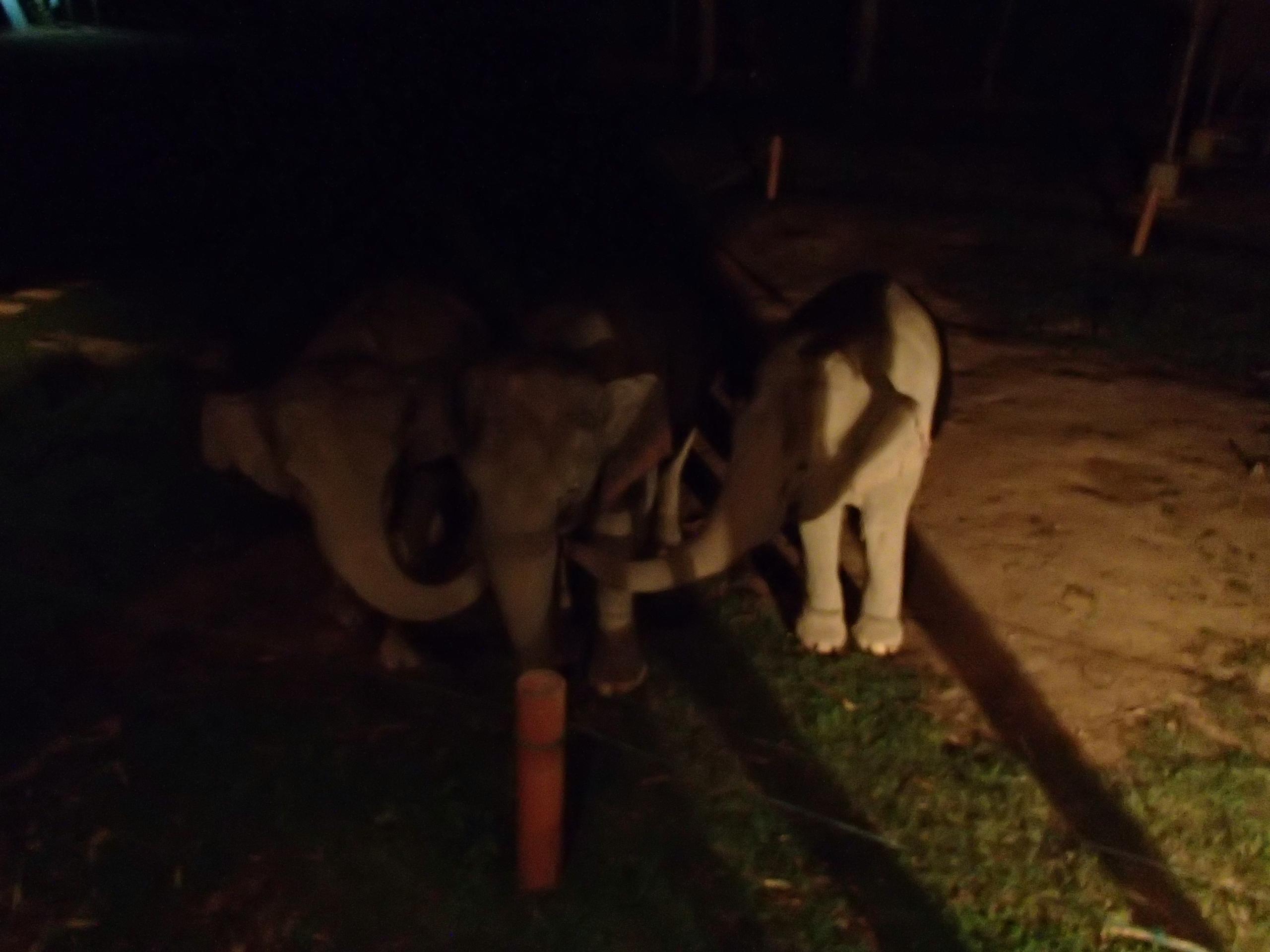 baby elephants Anantara