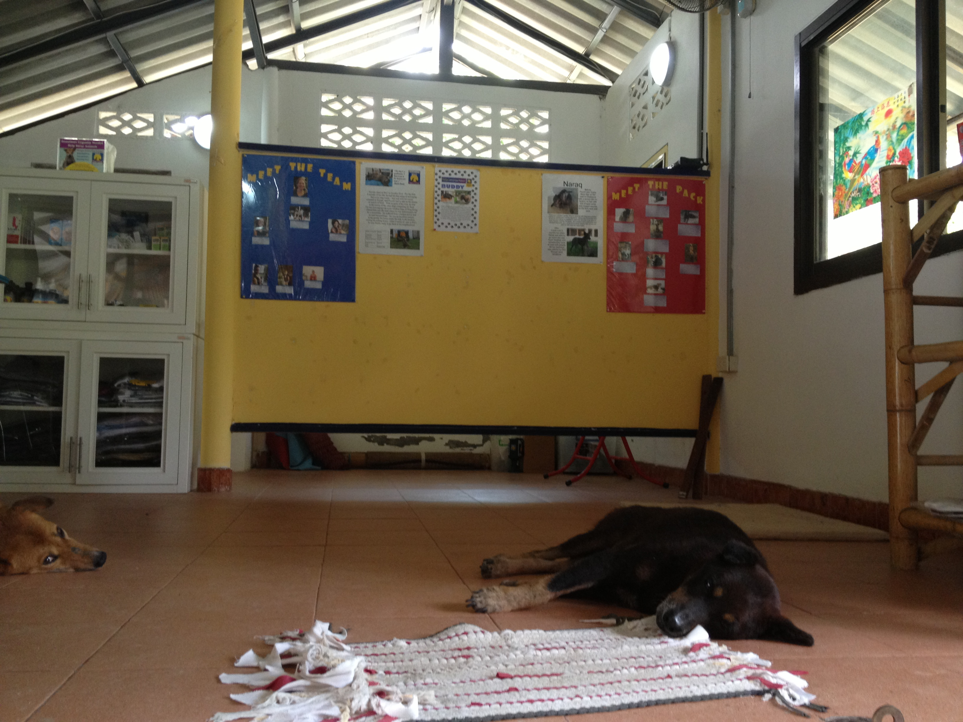 Phangan Animal Care office