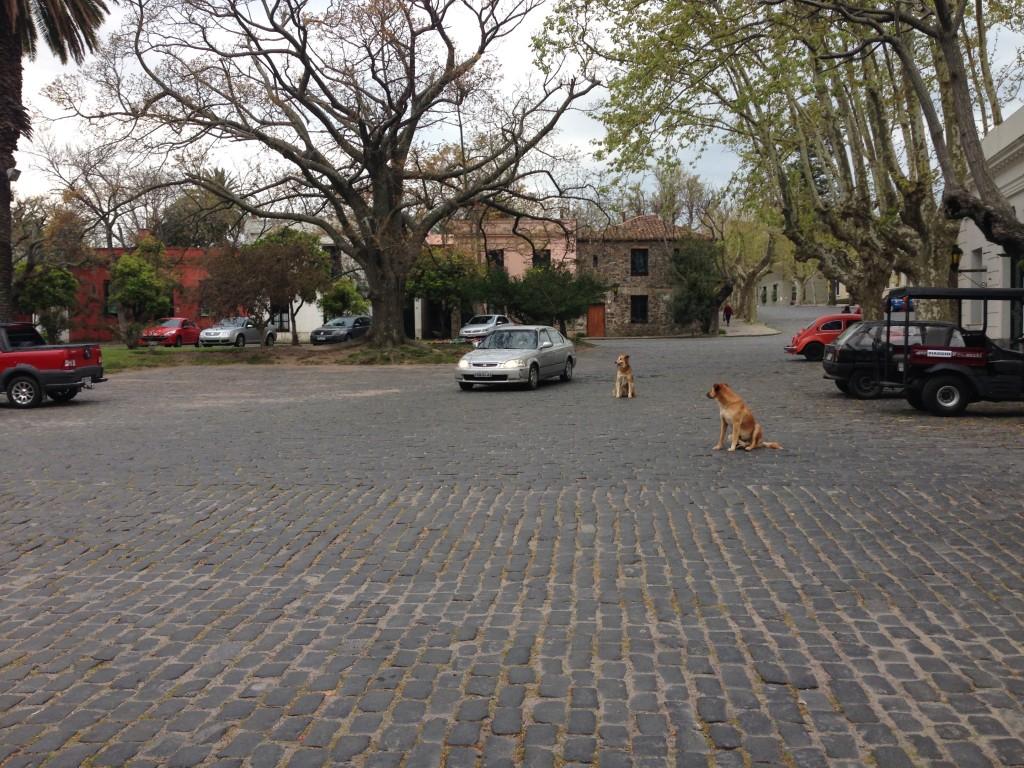 Colonia del Sacramento Uruguay stray Dogs