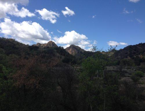 LA Hike: Malibu Creek State Park