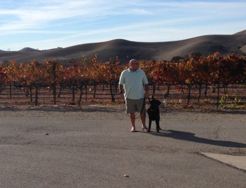 Dog Friendly Wine Tasting in Santa Barbara County