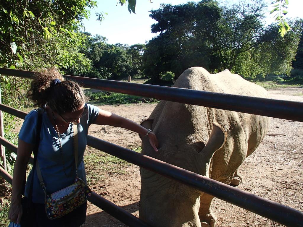 Endangered white rhino at Uganda Wildlife Education Centre