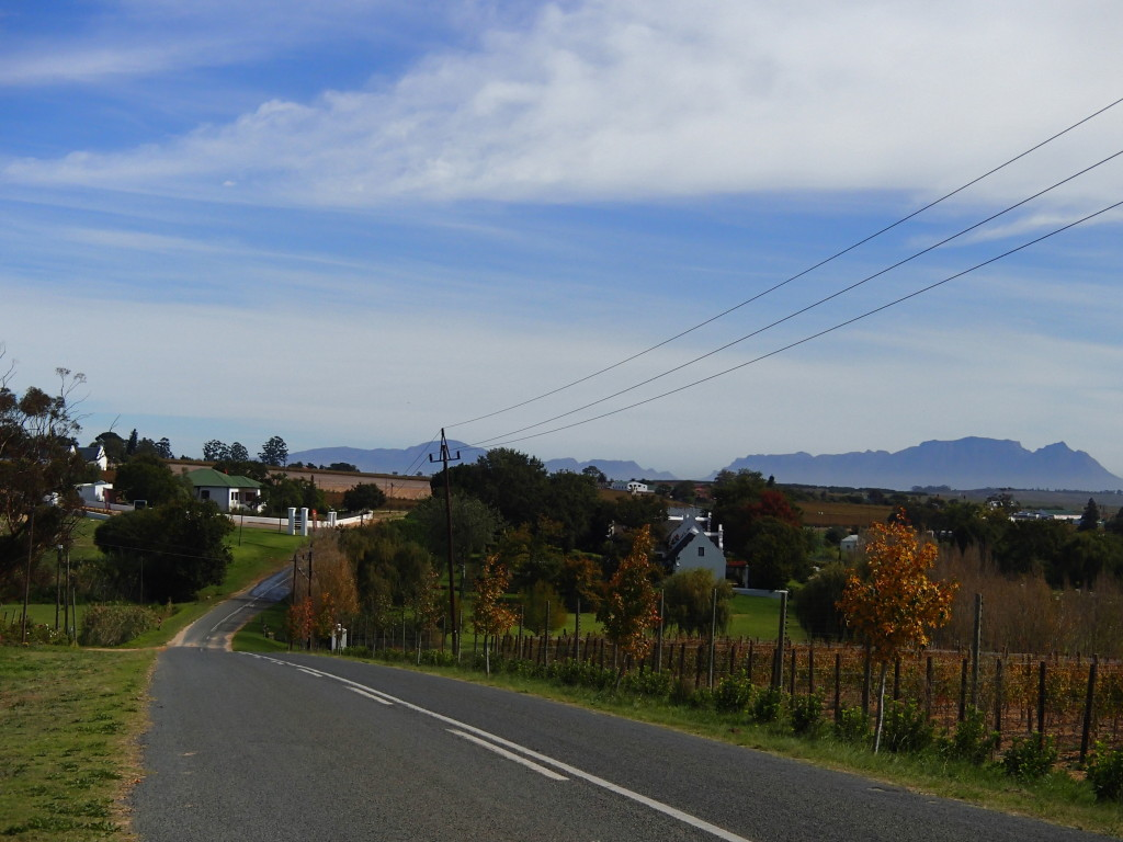 Road through Stellenbosch vineyards