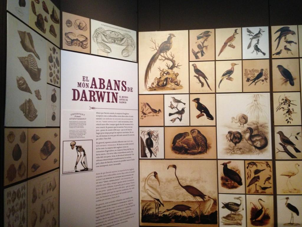 Maritime Museum Barcelona Darwin Exhibit