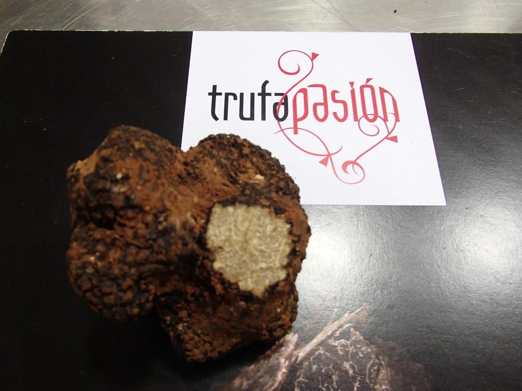 Spanish summer truffle