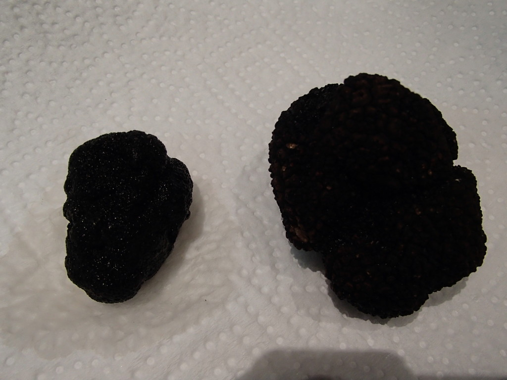 Fresh truffle from Spain