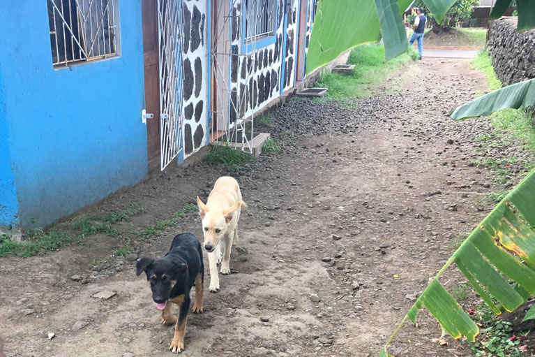 Puppies in Hanga Roa