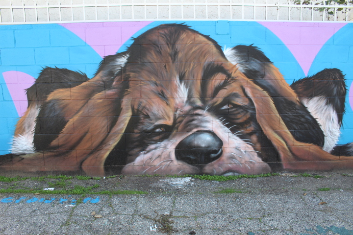 Gabba Alley Project Dog
