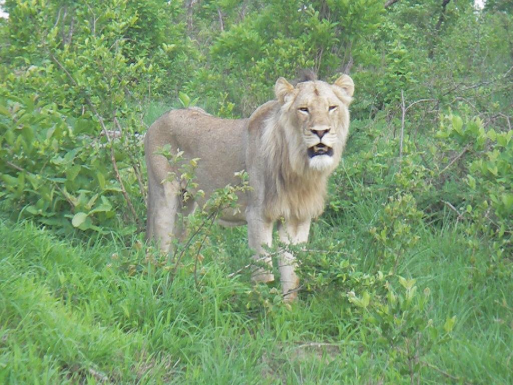 Sabi Sands Kruger Park South Africa